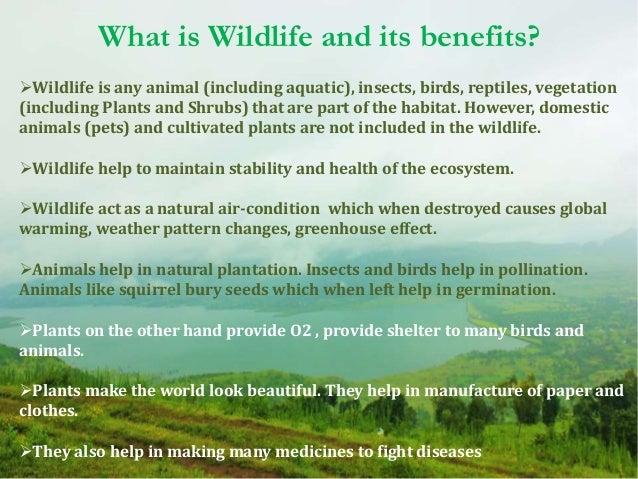 10 Ways to Conserve Biodiversity