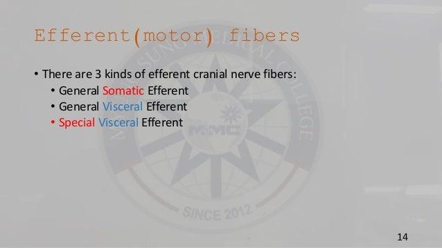 Somatic and visceral nerve fibers