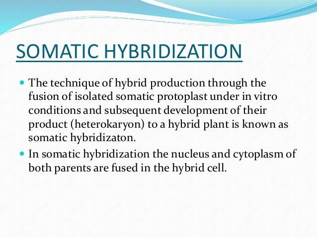 Somatic hybridization.