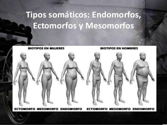 Tipos somáticos: Endomorfos, Ectomorfos y Mesomorfos