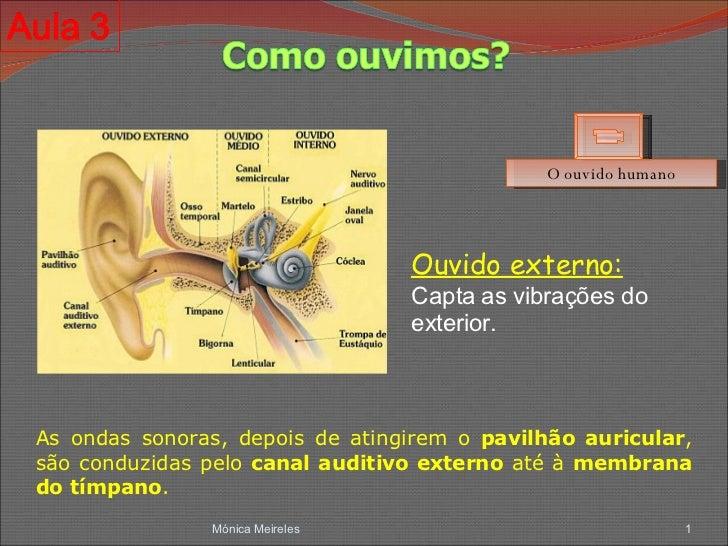 Mónica Meireles O ouvido humano As ondas sonoras, depois de atingirem o  pavilhão auricular , são conduzidas pelo  canal a...