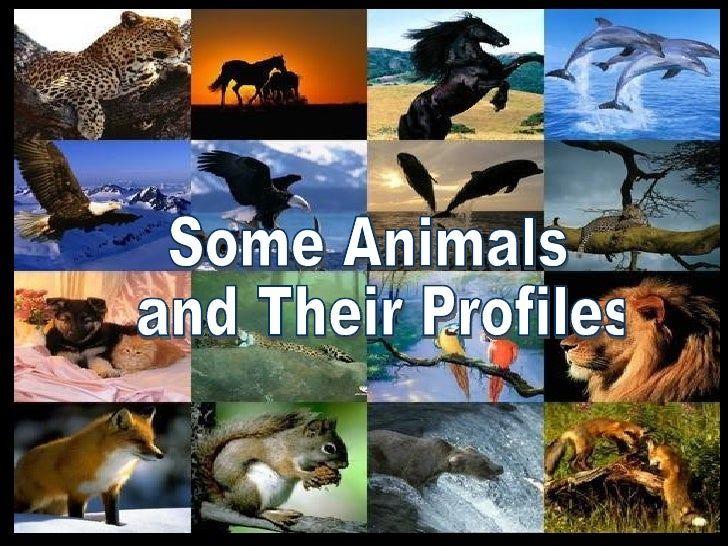 Some Animals and Their Profiles