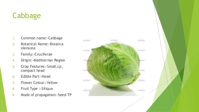 Some Important Fact About Vegetables A Lecture By Mr Allah Dad Khan F
