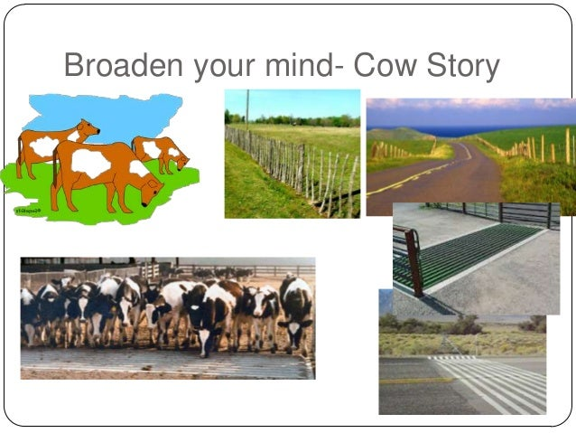 Broaden your mind- Cow Story