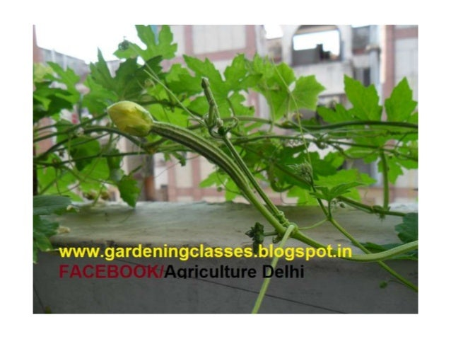 Somesh Jha - Freelance Agroconsultant- India