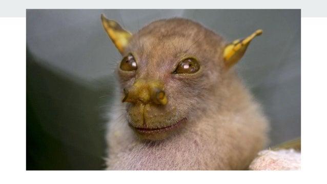 Yoda Yoda bat