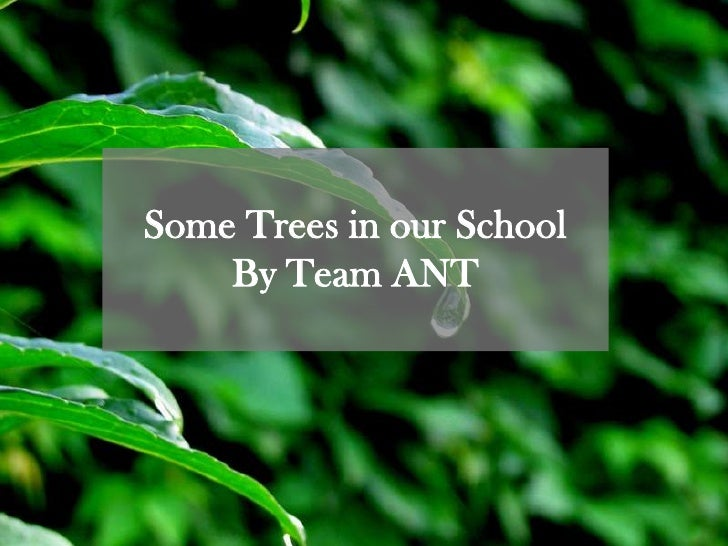 Some Trees in our School<br />By Team ANT<br />