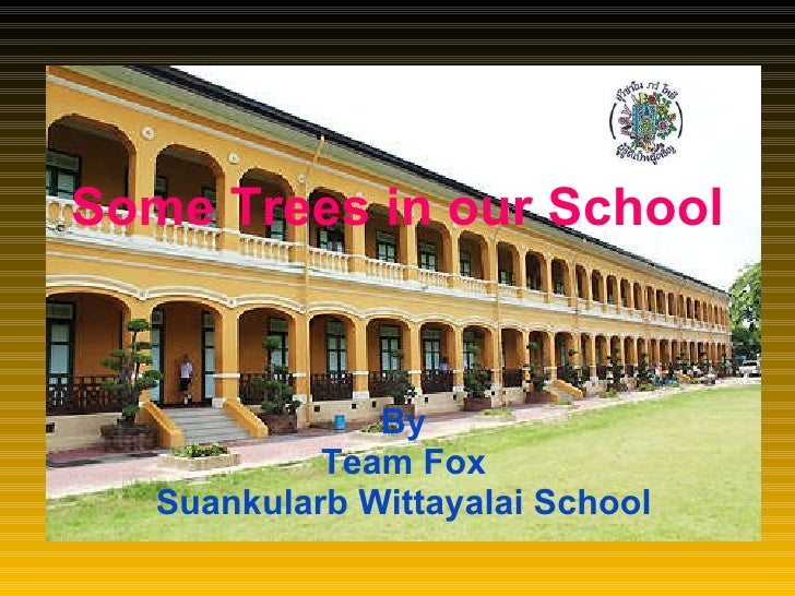 Some Trees in our School By Team Fox Suankularb Wittayalai School
