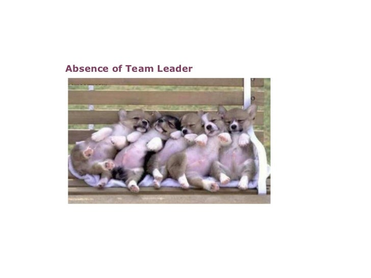 Absence of Team Leader                                                                                                    ...