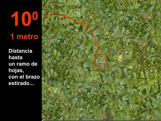 Distancia hasta un ramo de hojas, con el brazo estirado... 100 1 metro