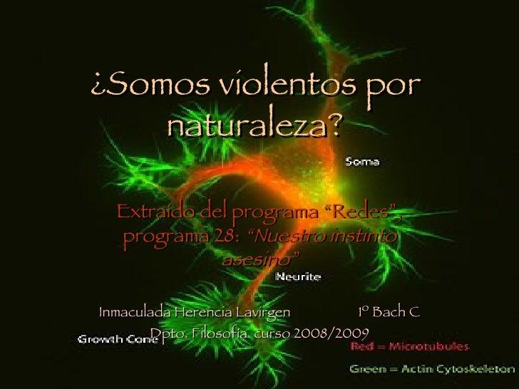 """¿Somos violentos por     naturaleza?    Extraído del programa """"Redes"""",   programa 28: """"Nuestro instinto              asesi..."""