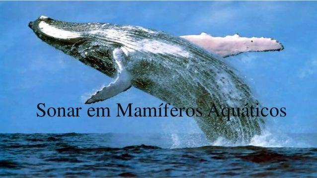 Sonar em Mamíferos Aquáticos