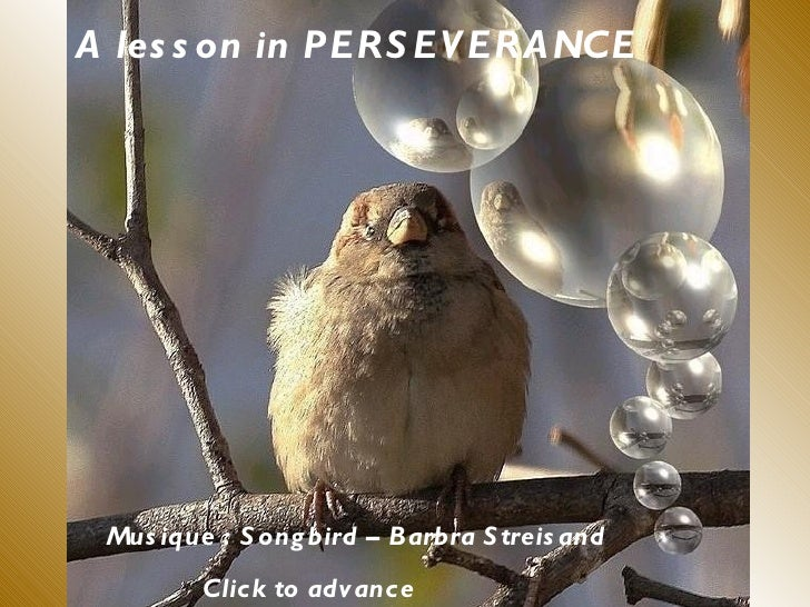 A les s on in PERS EV ERA NCE Mus ique : S ong bird – Barbra S treis and         Click to advance
