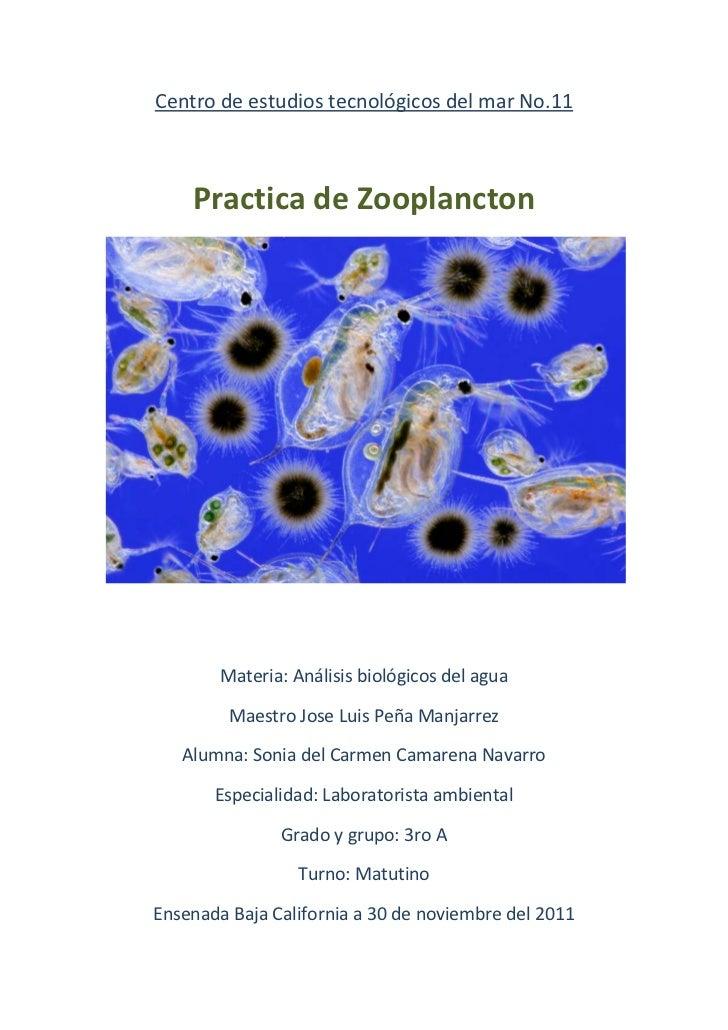 Centro de estudios tecnológicos del mar No.11    Practica de Zooplancton        Materia: Análisis biológicos del agua     ...
