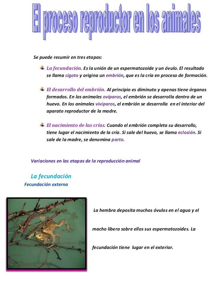 Se puede resumir en tres etapas:         La fecundación. Es la unión de un espermatozoide y un óvulo. El resultado        ...