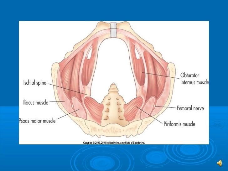 Sono 202 normal gyn anatomy