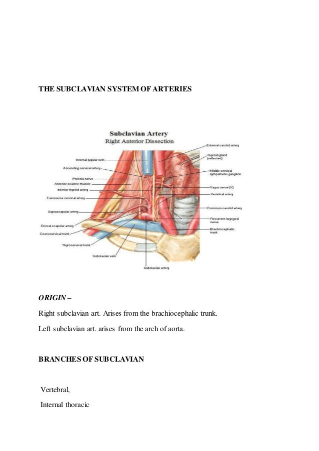 Contemporary Neck Dissection Anatomy Ppt Elaboration - Image of ...