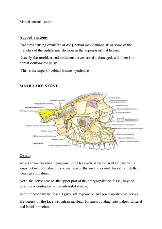 Blood Supply And Nerve Supply To Head And Neck