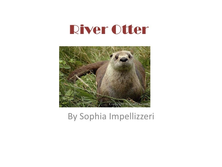 River Otter <br />By Sophia Impellizzeri<br />