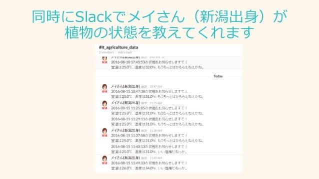 同時にSlackでメイさん(新潟出身)が 植物の状態を教えてくれます