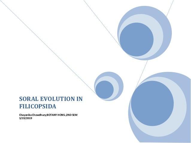 SORAL EVOLUTION IN FILICOPSIDA Chayanika Chowdhury;BOTANY HONS.;2ND SEM 3/19/2019