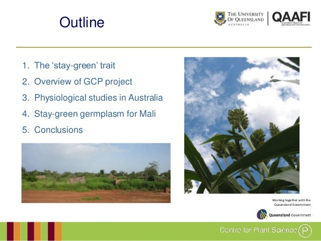 GRM 2011: Development and evaluation of drought-adapted sorghum germplasm for Africa and Australia Slide 2