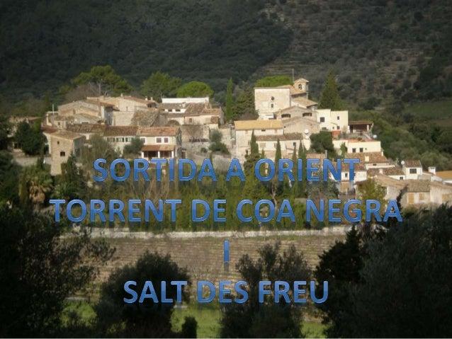 SORTIDA TORRENT DE COA NEGRA SALT DES FREU 2N TRIMESTRE