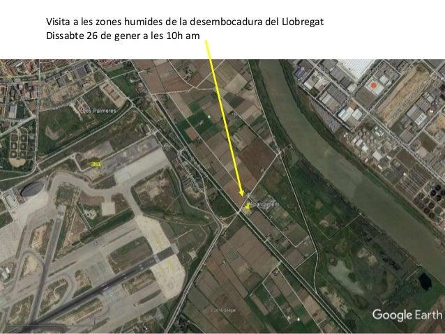 Visita a les zones humides de la desembocadura del Llobregat Dissabte 26 de gener a les 10h am