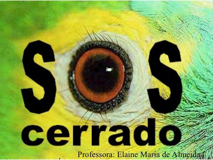Professora: Elaine Maria de Almeida