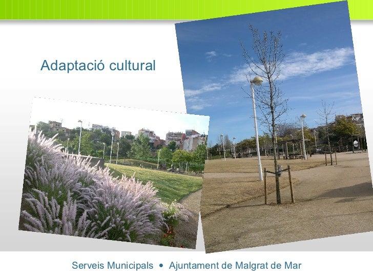 Serveis Municipals     Ajuntament de Malgrat de Mar Adaptació cultural