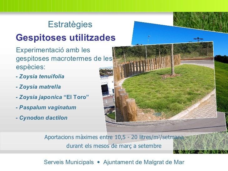 Serveis Municipals     Ajuntament de Malgrat de Mar Experimentació amb les gespitoses macrotermes de les espècies: Gespit...
