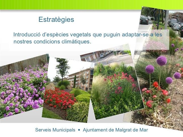 Serveis Municipals     Ajuntament de Malgrat de Mar Introducció d'espècies vegetals que puguin adaptar-se a les nostres c...