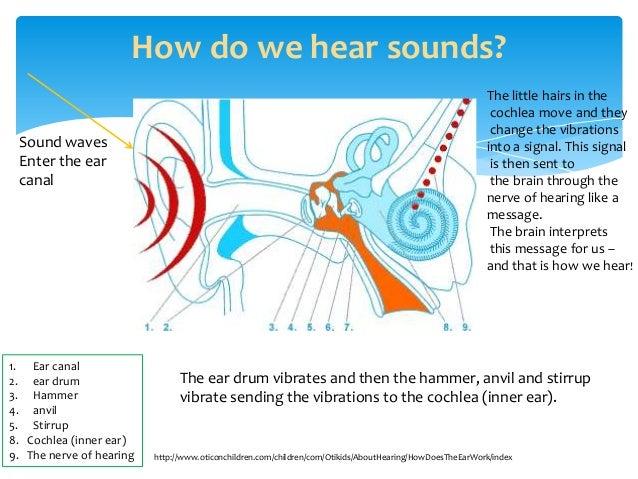 How Do We Hear Sound Diagram Enthusiast Wiring Diagrams