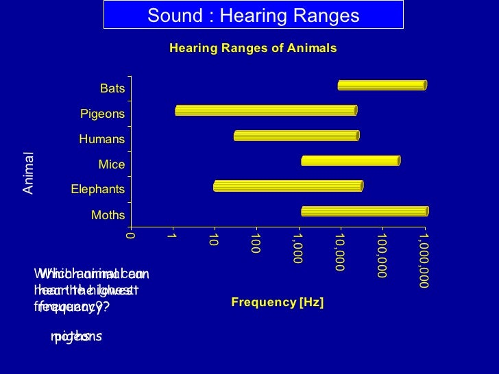 What Is The Highest Frequency A Dog Can Hear
