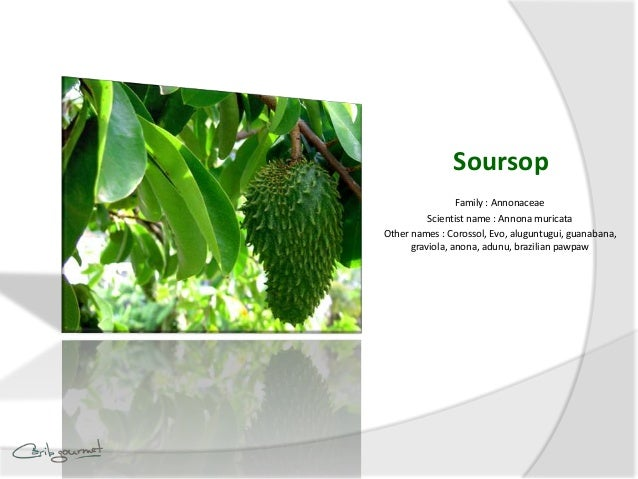 What is Soursop?