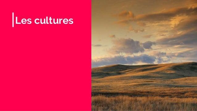 Les cultures