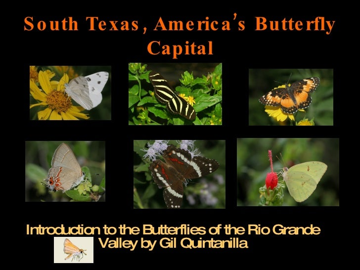 South Texas, America's Butterfly Capital Introduction to the Butterflies of the Rio Grande Valley by Gil Quintanilla