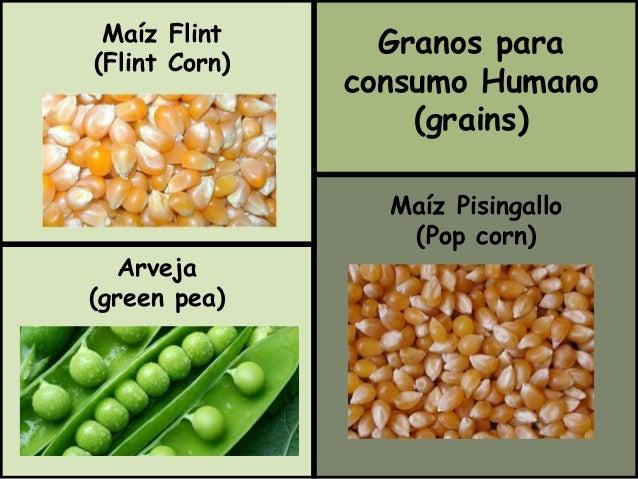 Granos para  consumo Humano  (grains)  Maíz Pisingallo  (Pop corn)  Maíz Flint  (Flint Corn)  Arveja  (green pea)