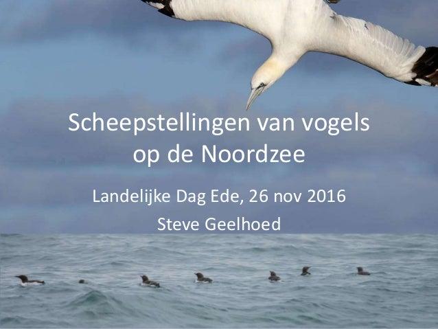 Scheepstellingen van vogels op de Noordzee Landelijke Dag Ede, 26 nov 2016 Steve Geelhoed
