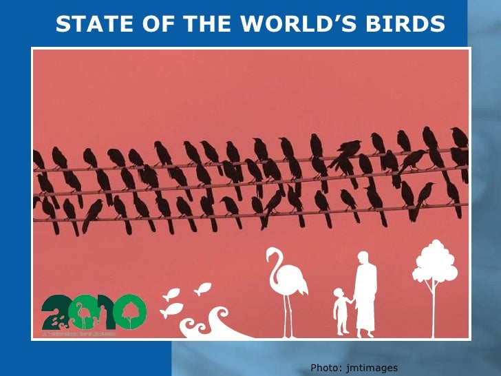 STATE OF THE WORLD'S BIRDS Photo: jmtimages