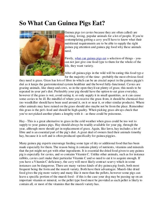 So what can guinea pigs eat so what can guinea pigs eat guinea pigs or cavies because they are often ccuart Image collections