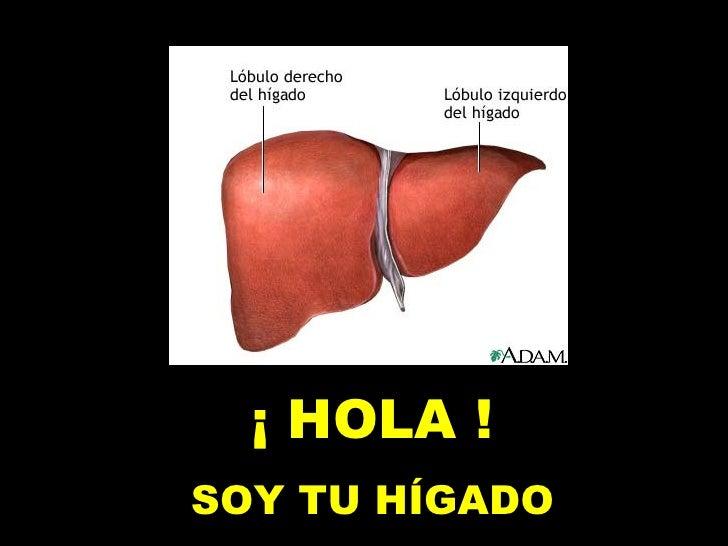 ¡ HOLA ! SOY TU HÍGADO