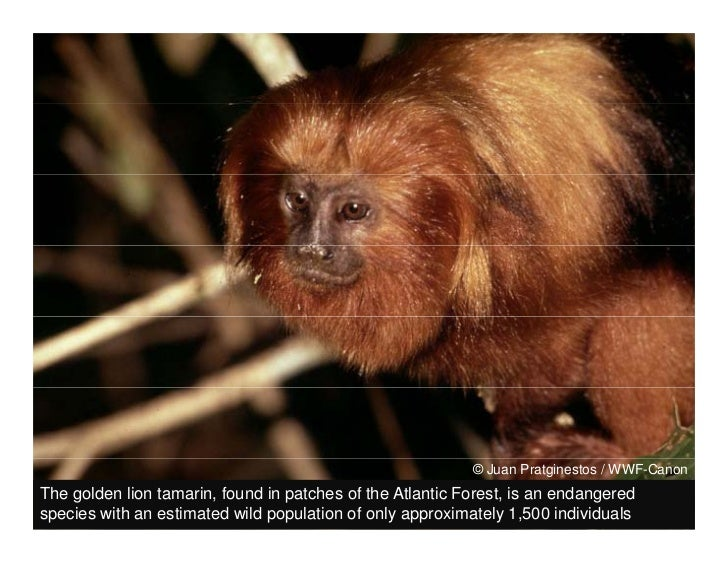 Wildlife & ecosystems threatened by the irresponsible expansion of soy Slide 3
