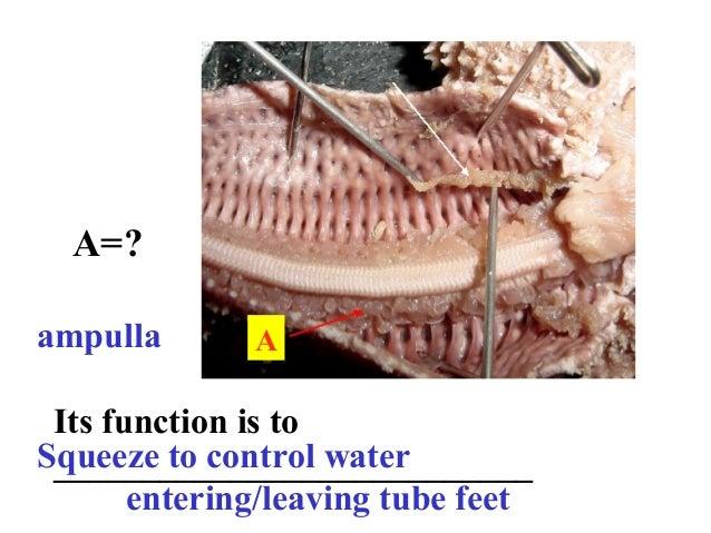 Sp06 starfish parts 1 Slide 3