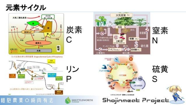 元素サイクル 炭素 C リン P 窒素 N 硫黄 S
