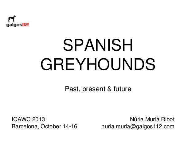 SPANISH GREYHOUNDS Past, present & future  ICAWC 2013 Barcelona, October 14-16  Núria Murlà Ribot nuria.murla@galgos112.co...