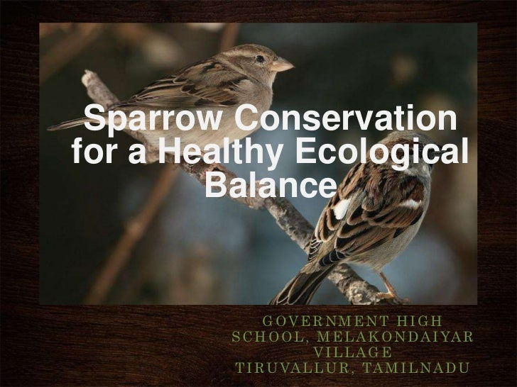 Sparrow Conservationfor a Healthy Ecological        Balance              GOVERNMENT HIGH         S C H O O L , M E L A K O...