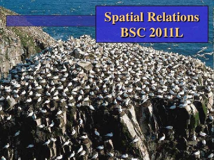 Spatial RelationsBSC 2011L<br />