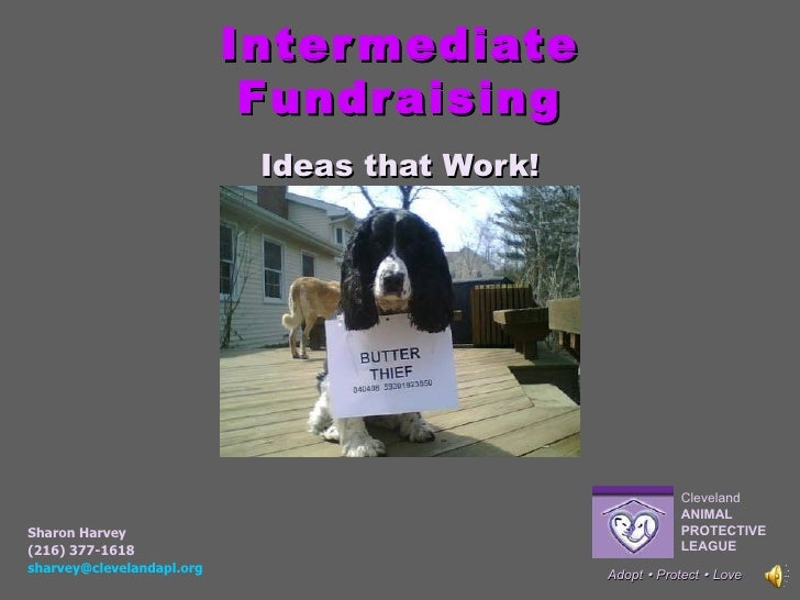 Intermediate Fundraising Ideas that Work! Adopt    Protect     Love Sharon Harvey (216) 377-1618 [email_address]   Cleve...