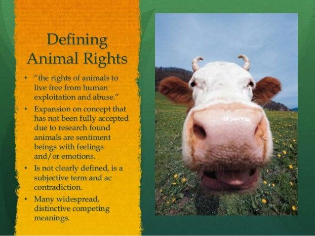 Spc2023 Animal Rights Informative Speech Presentation